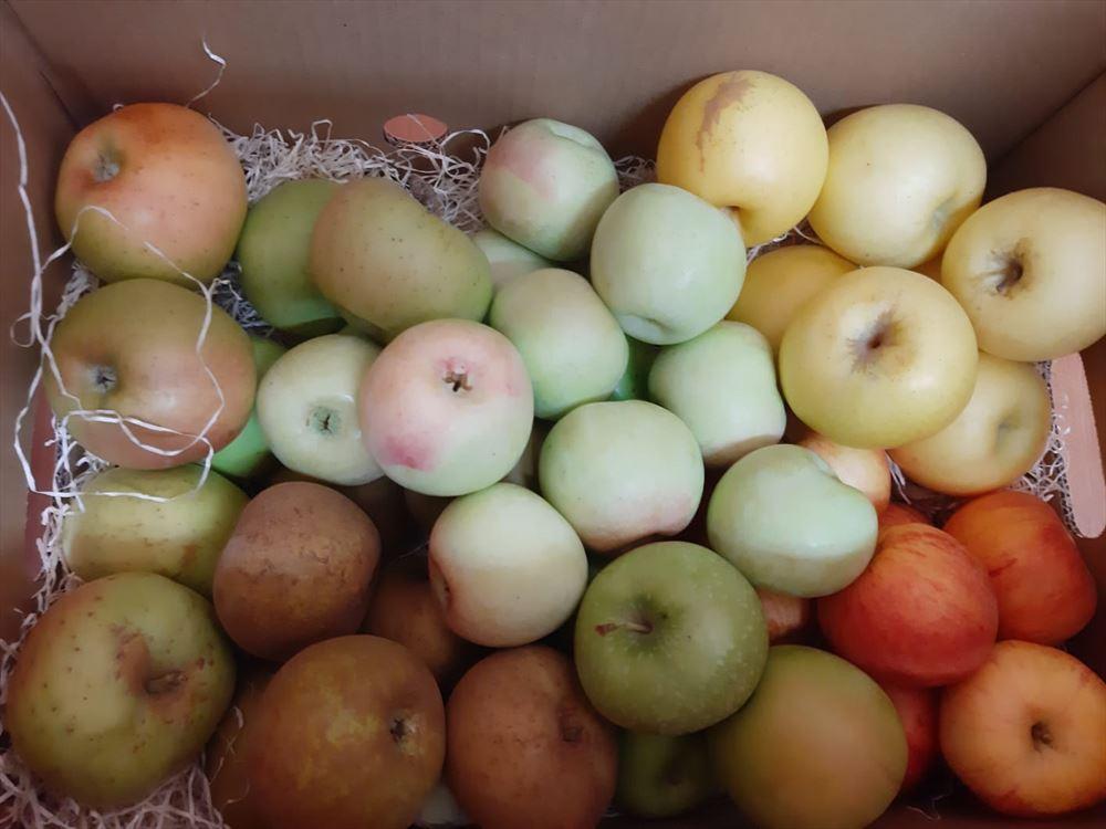 Caja Todo Manzanas MINI 3,5 kilos